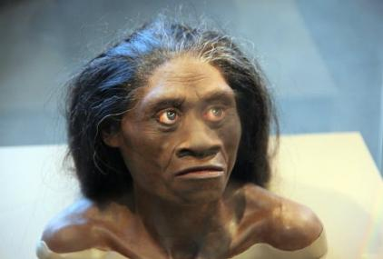 An artist's interpretation of how H. floresiensis looked in life. Tim Evanson/Flickr, CC BY-SA
